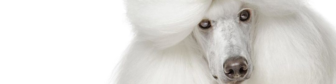 Yuup! Cosmetics for dogs