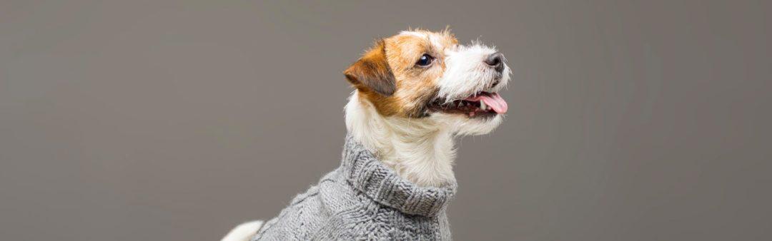 Cane con maglione fashion