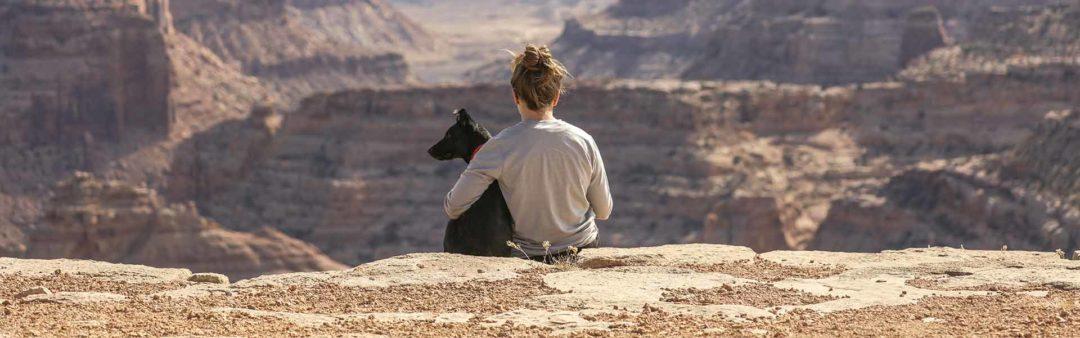 Il cane e la cura estetica