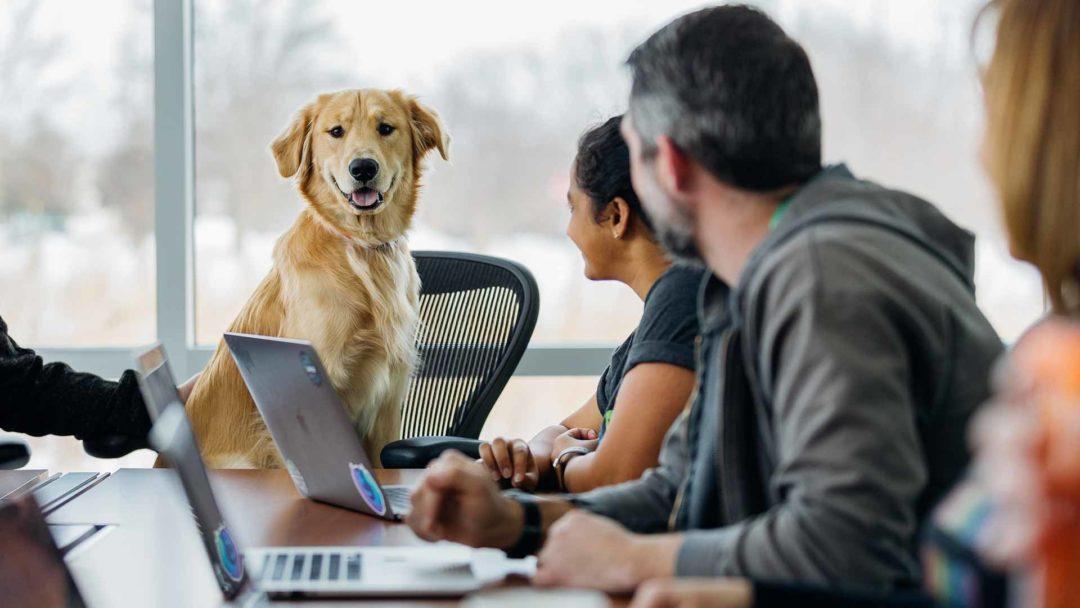 Cura del cane e lavoro