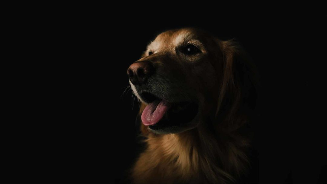 Negozio di prodotto per cane