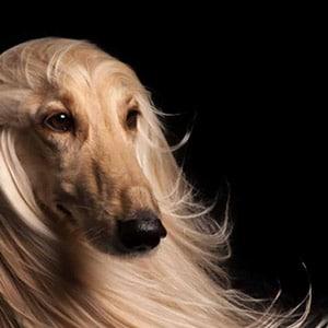 cosmetici per cani