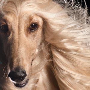 Shampoo per cane