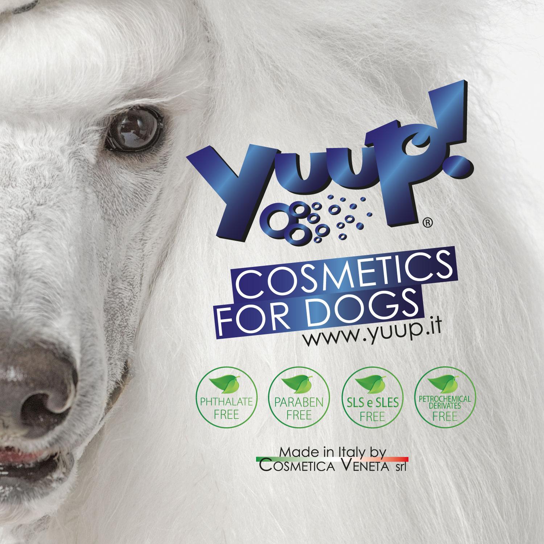YUUP! branding