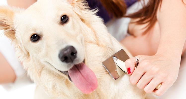 Cardatore per cane