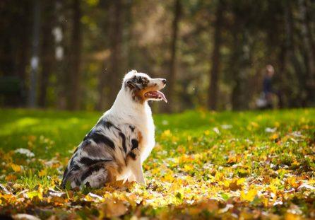 Cane libero e pulito da pulci e zecche