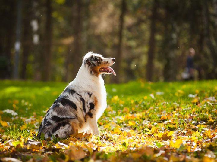 Cosa fare se il cane ha preso le zecche?