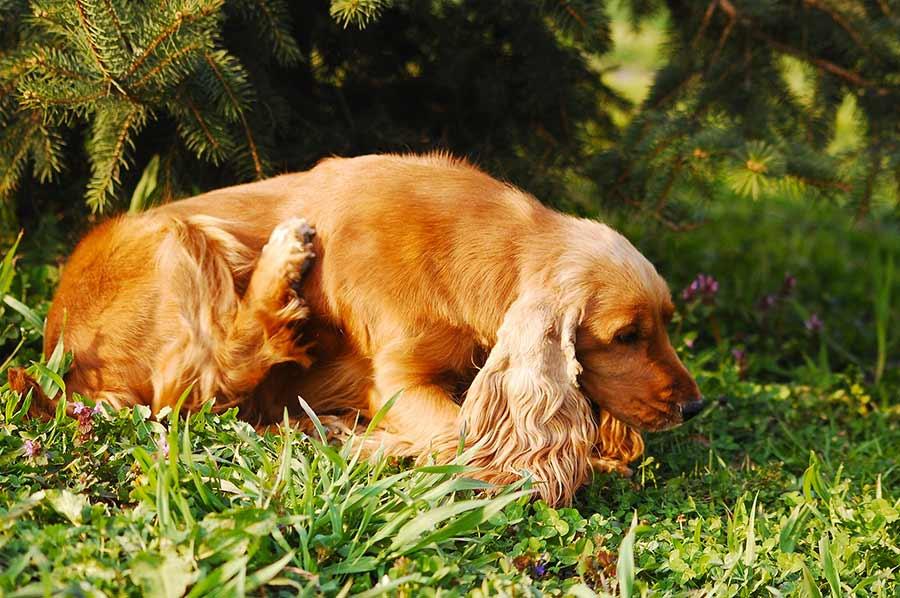 Shampoo antiparassiti per cane