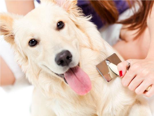 Spazzolare il cane, come e perché