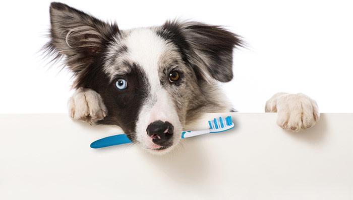Lavare i denti del cane