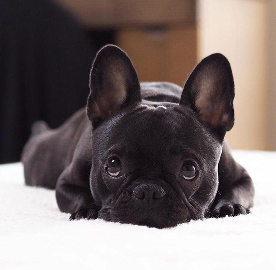 Pulire denti, orecchie e occhi del cane