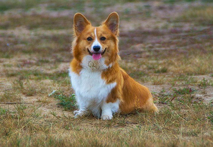 Fido si fa bello: pulire denti, orecchie e occhi al cane