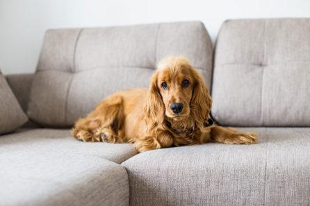 Slanatore per cani