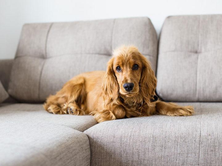 Slanatore per cani: cos'è e come si usa