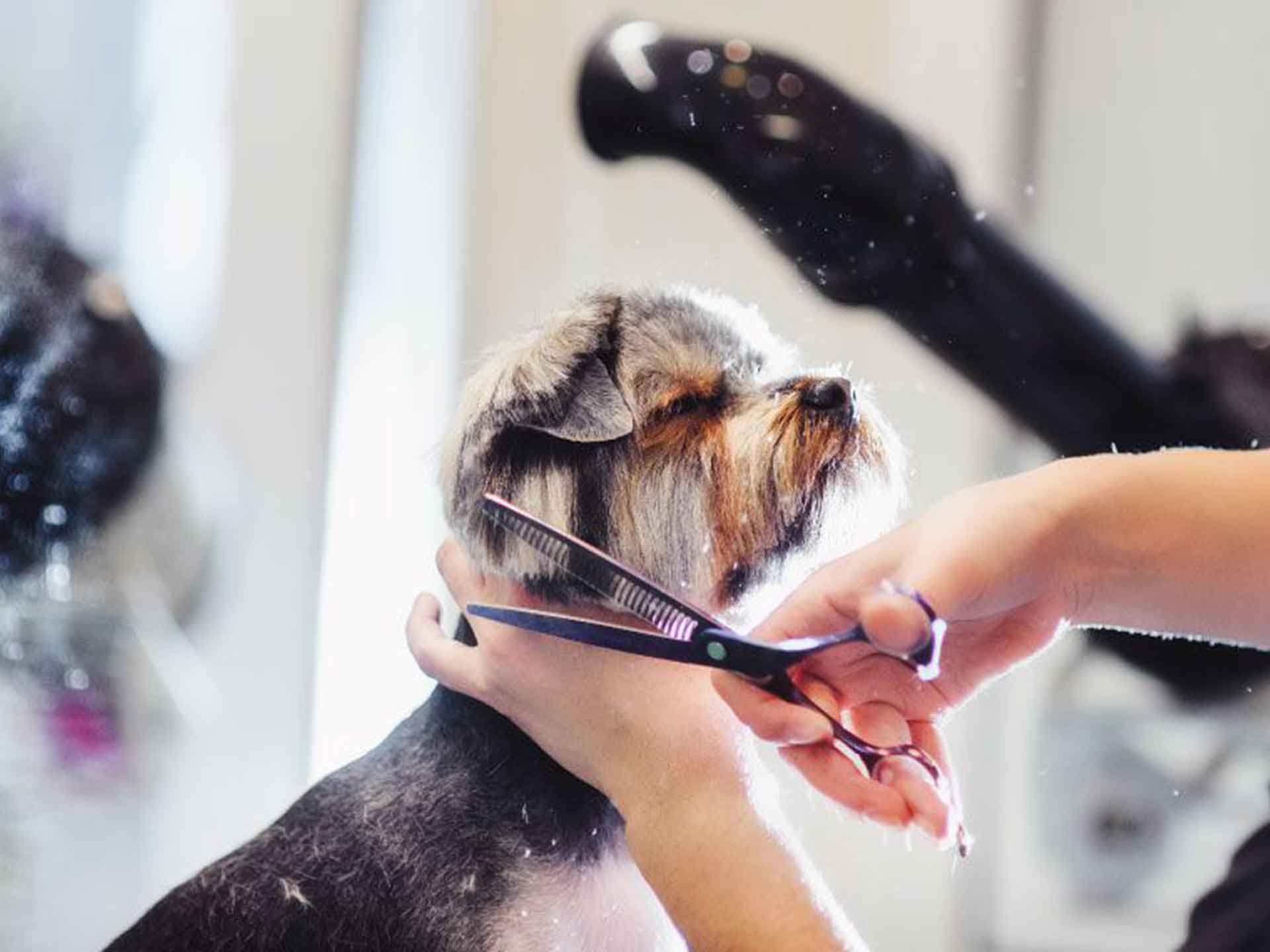 Accademia di Toelettatura Grooming Academy
