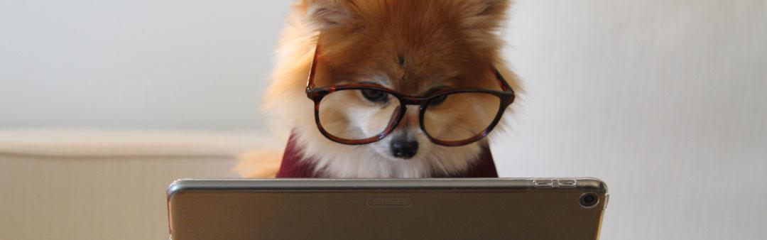 Notizie, articoli, eventi sui cani