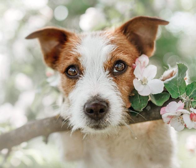 """""""Aiuto, il mio cane puzza!"""": come eliminare l'odore di cane in casa"""