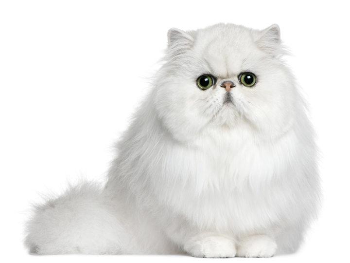 Sì, anche i gatti hanno la forfora!