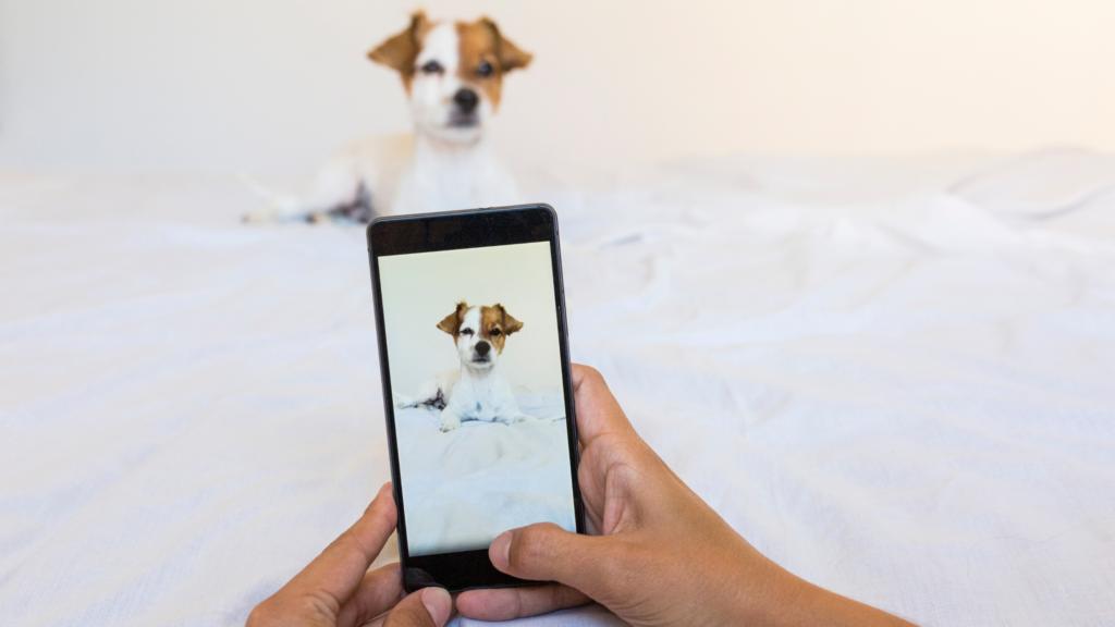 Cane instagram pet influencer
