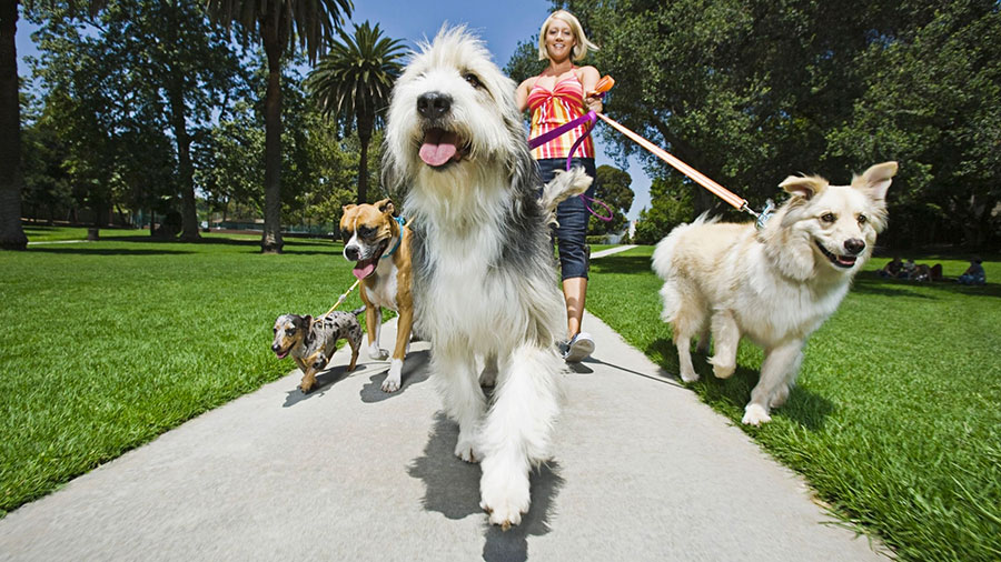 lavorare come dog-walker