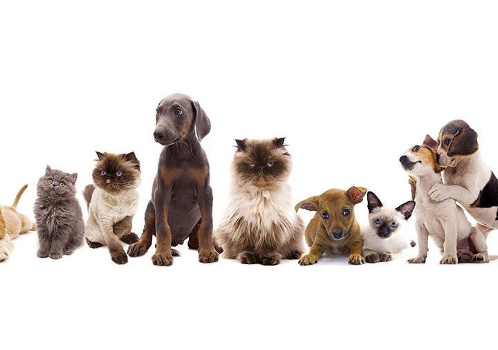 Ami gli animali? Eccoti un elenco di 5 incredibili opportunità per lavorare con gli animali