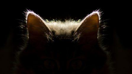 Come pulire le orecchie al gatto in sicurezza e comfort? Puoi farlo tu stesso! Ecco la guida definitiva che renderà il tuo gatto pulito e felice.
