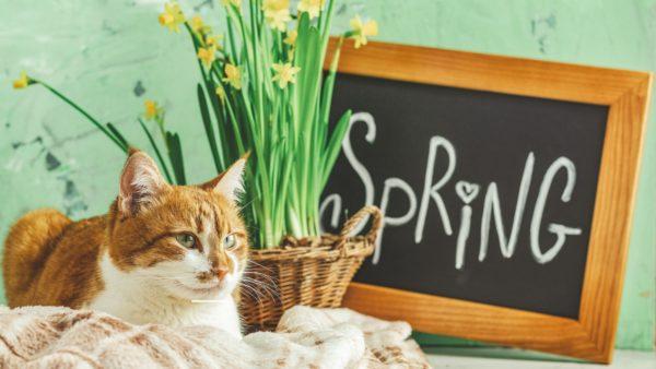 Il gatto cambia il pelo in primavera