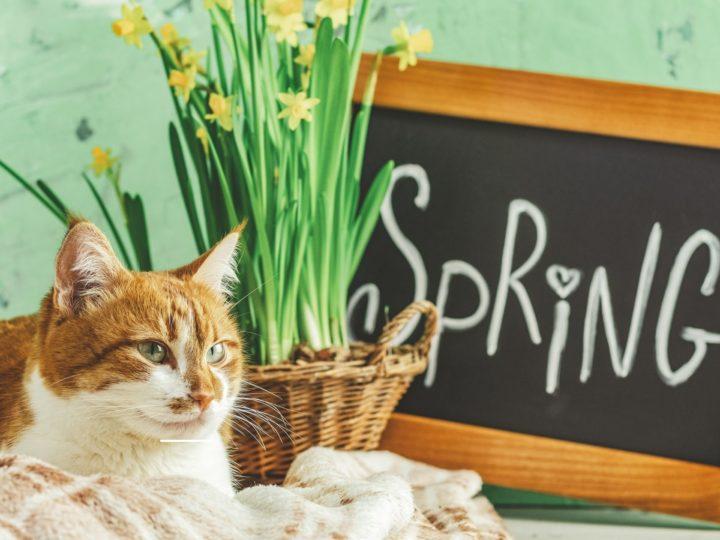 Il gatto cambia il pelo: la primavere e le sue insidie
