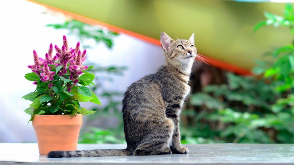 Piante pericolose per i gatti