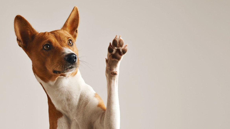 come proteggere le zampe del tuo cane