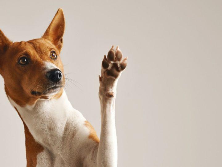 Zampette felici: come proteggere le zampe del tuo cane