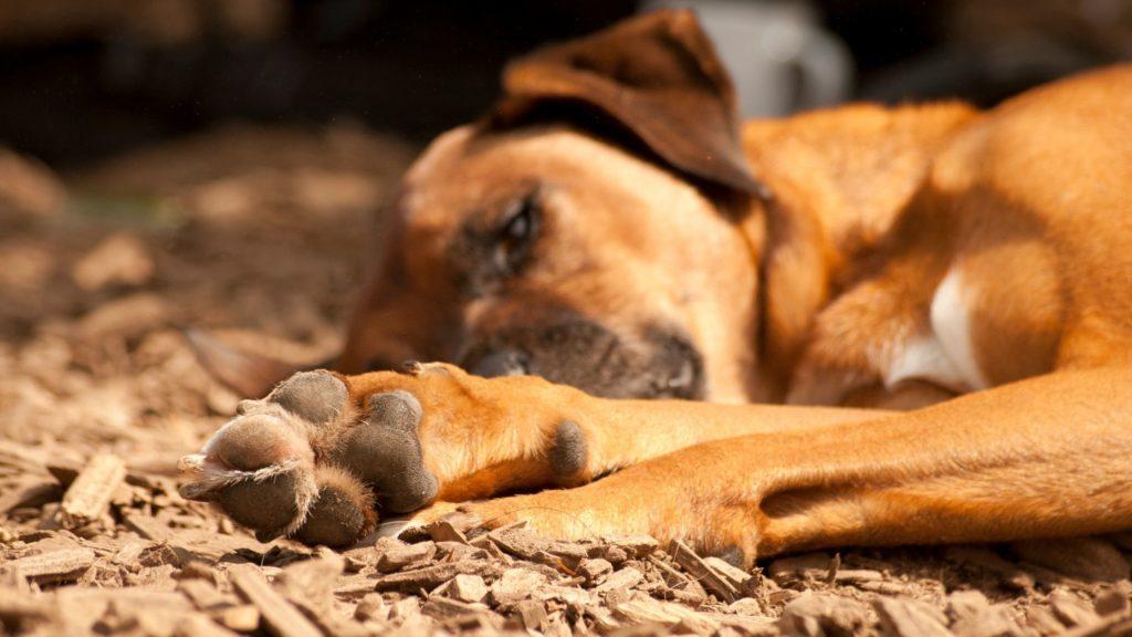 come proteggere le zampe del tuo cane dal caldo
