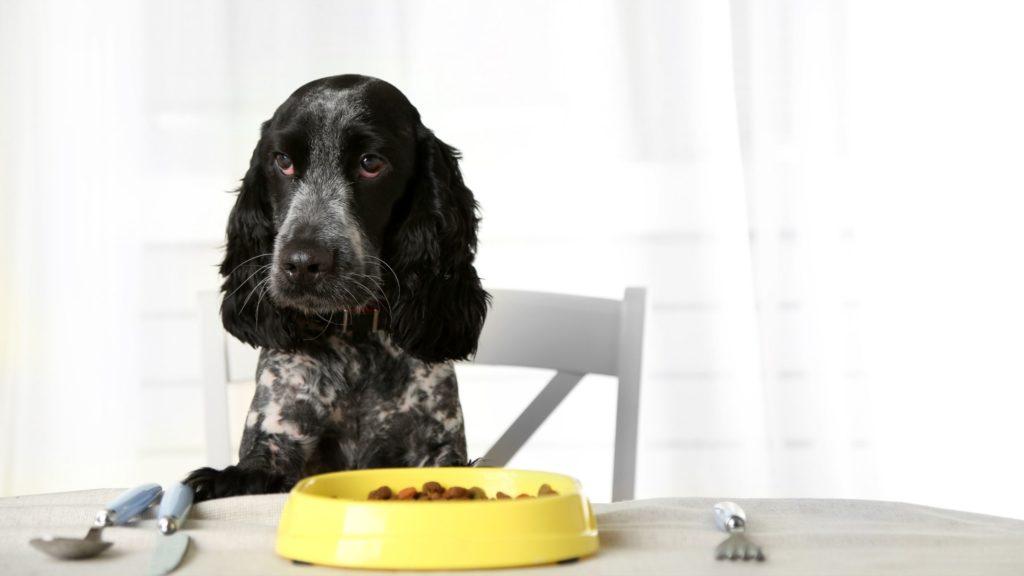 Alimentazione per cani neri