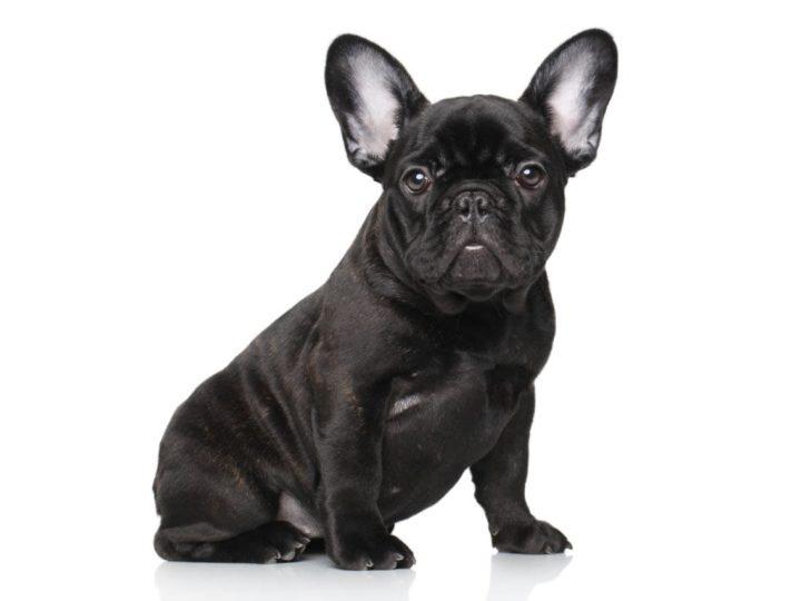 La bellezza dei cani neri e come preservarla