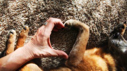 protezione zampe cane caldo